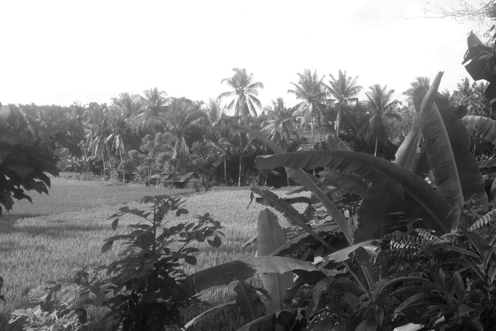 Ancient Bali Tour Bongkasa Village