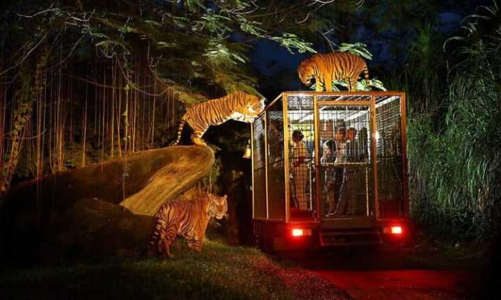 Night Tour di Bali Safari and Marine Park