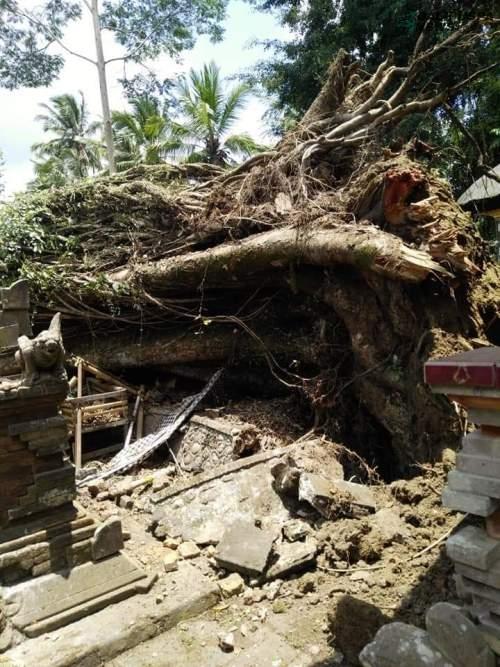 Pohon kepah raksasa roboh menimpa Pura Sakti Togoh, Bumbungan