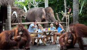 Bali ATV Quad Bike and Breakfast with Orangutan