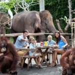 Bali ATV Quad Bike and Breakfast with Orangutan