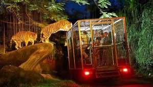 Night Safari at Bali Safari Marine Park