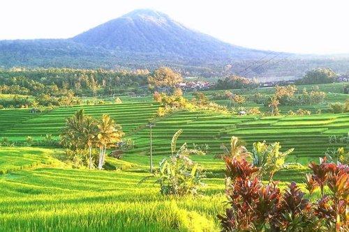 jatiluwih, bali, unesco, world, heritages, sites, rice, paddy, terrace, rice terrace, jatiluwih rice terrace, unesco world heritages