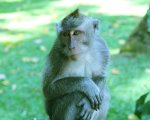 sangeh, monkey, forest, bali, places, interest, sangeh monkey forest, what to see