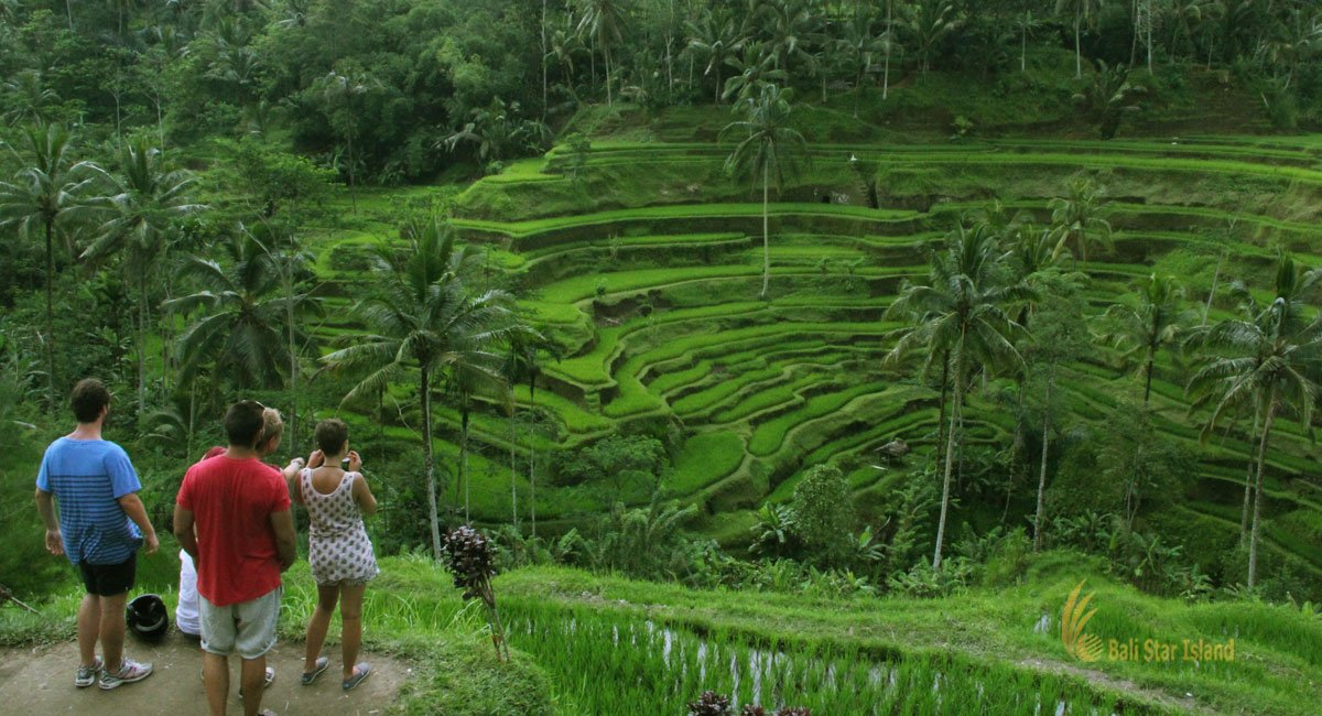Tegalalang Rice Terrace | Bali Places of Interest