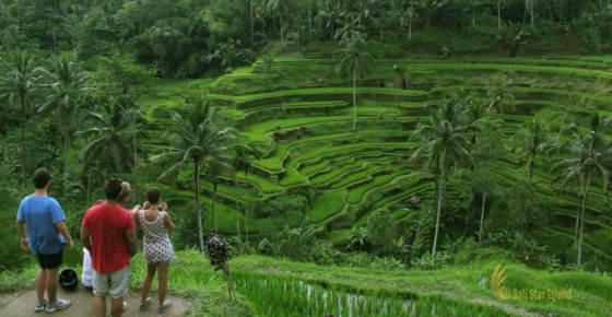 Tegalalang Rice Terrace | Ubud Bali Place of Interest