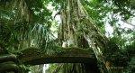 ubud, monkey, forest, bali, places, interest, ubud monkey forest, monkey forest, places of interest, bali places of interest, monkey forest