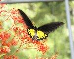 bali butterfly, butterfly park, bali butterfly park, bali butterfly park tabanan