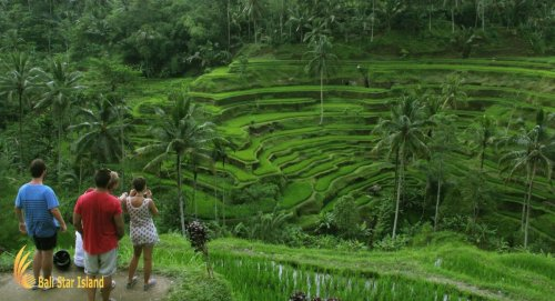 ubud tour, ubud tours, ubud village tour, bali tours