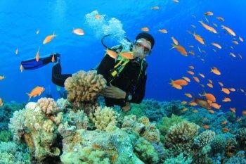 bali diving, tours, padi, course, bali dive courses, bali dive tours
