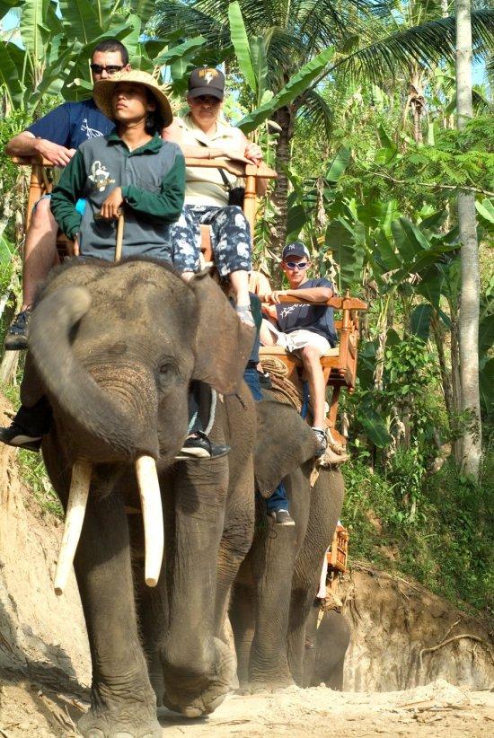 bali, elephant, sumatra, camp, bali elephant, bali elephant camp, safari, elephant safari, elephant riding, elephant safari ride, sumatra elephant riding