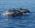 bali, dolphin, marine, water, sport, activities, bali dolphin tour, bali marine activities, bali water sport