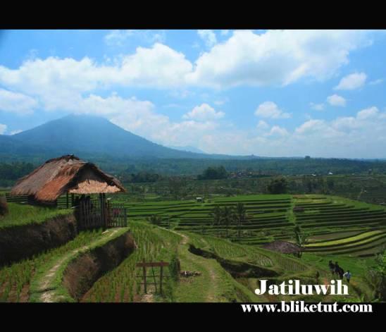 jatiluwih-rice-terraces2