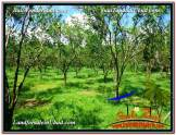 Beautiful LAND FOR SALE IN UBUD TJUB598