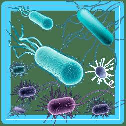 Organismos patogenos 955 especies invasoras