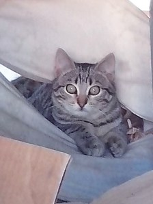 TINOU : Mâle d'environ 7 mois - encore timide - vit actuellement dans la rue.