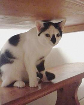 DOMINO : Minette de 8 mois, joueuse mais timide, OK chats.
