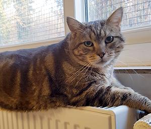 LE CHAT : Quelques chats à l'adoption : des mâles et des femelles entre 1 et 4 ans.