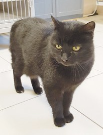 MOUXY : Quelques chats à l'adoption : des mâles et des femelles entre 1 et 4 ans.