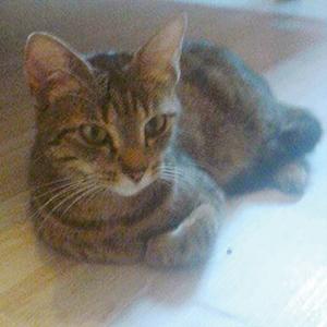 CHIPIE : Minette de 2 ans, très douce, gentille, câline c'est un amour de chat.