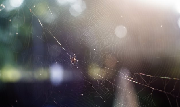 Photographing Spider Webs – Much Harder Than I Thought…