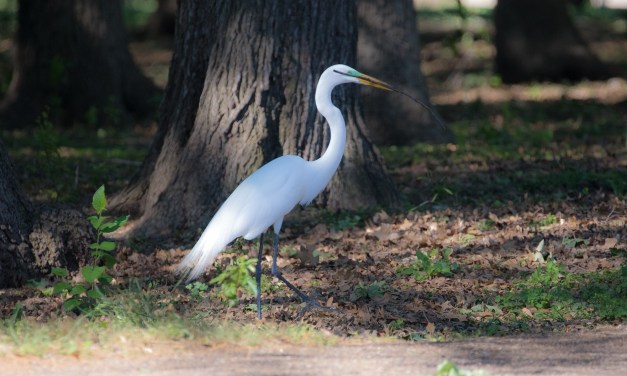 The Rookery in Dallas – A Slice of Paradise in the Midst of Chaos