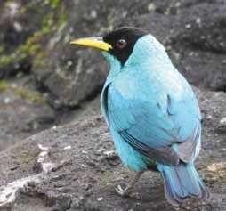Una bióloga especializada en aves 2
