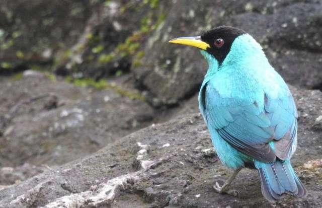 Una bióloga especializada en aves - Ballena Tales The Magazine