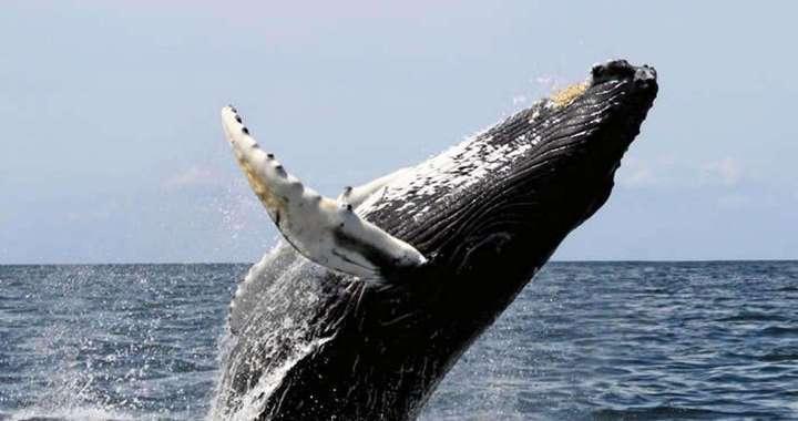Festival de Ballenas y Delfines, Una noche más ~ un mega trato - Osa, Uvita, Costa Ballena
