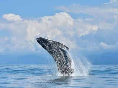 whale watching tour costa rica