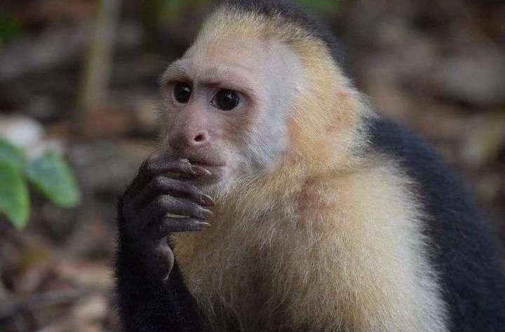 Monkey Jungle Jaguar Lodge