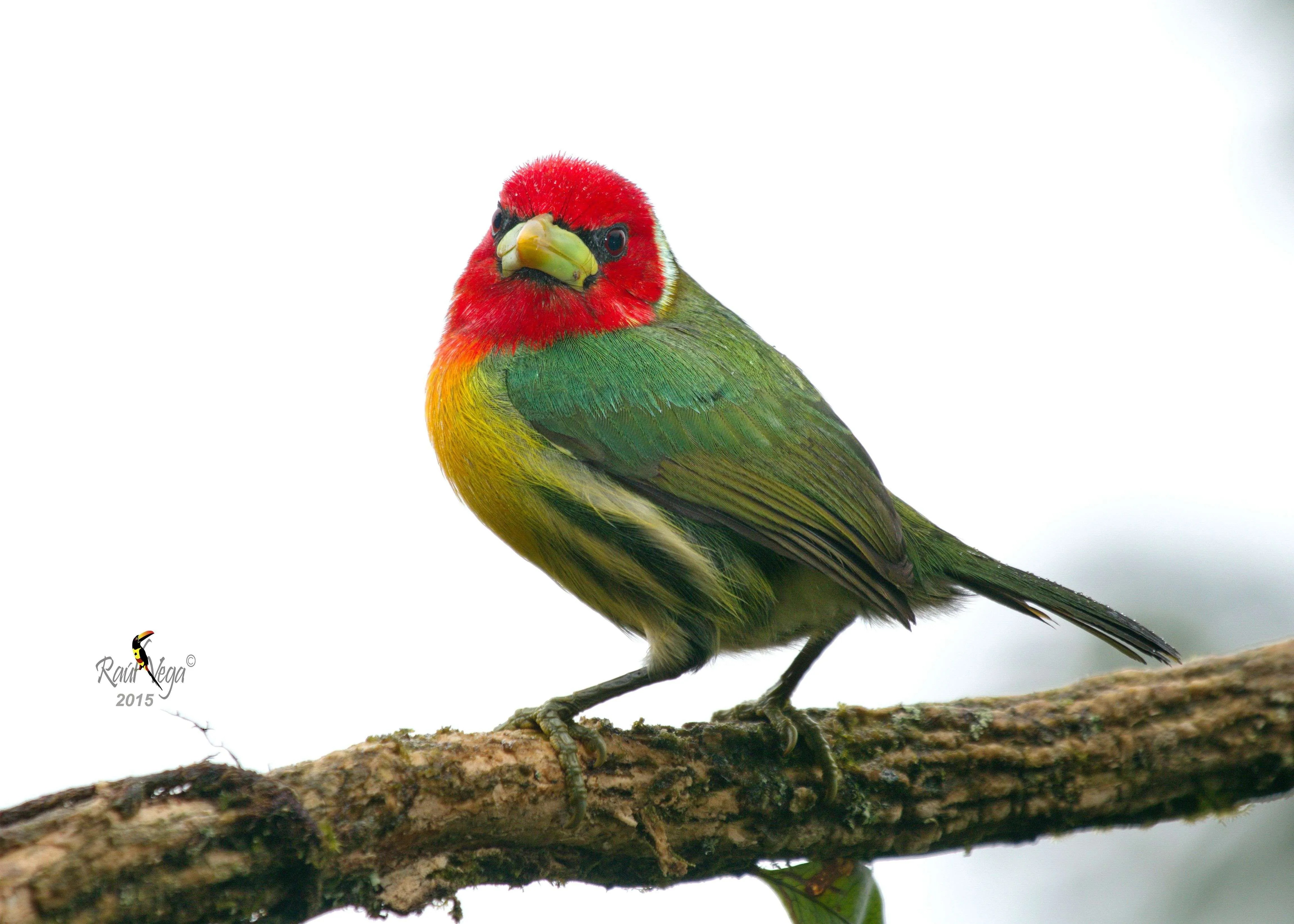 Costa Rica: Angry Birds