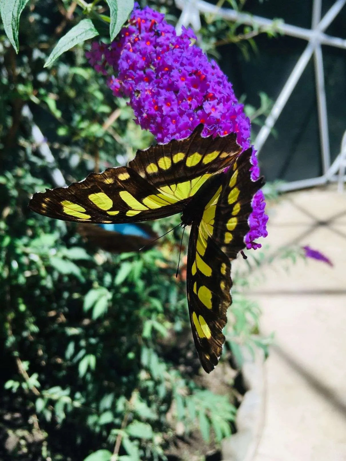 Butterflies: Casa Alegria is an Unforgettable Experience 1