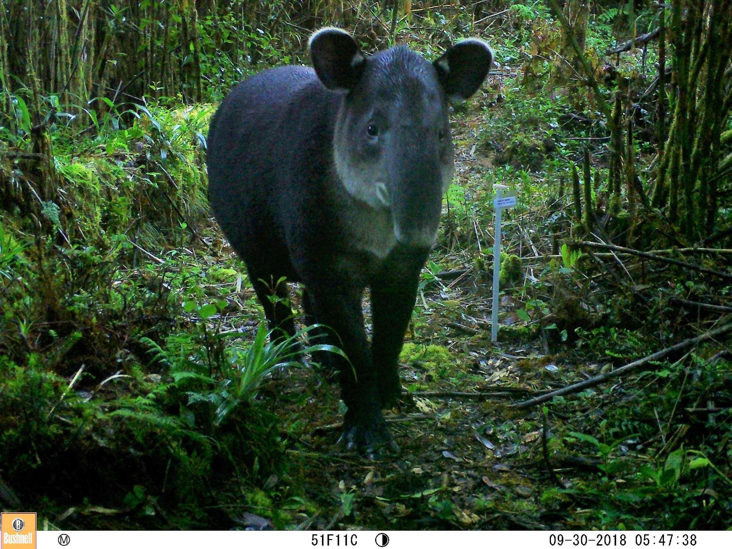 path of tapir - corredor biológico paso de la danta