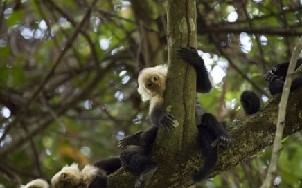 teenage monkeys, monos adolescentes