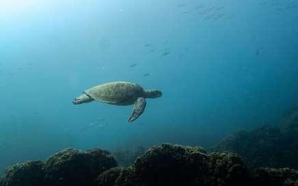 conservación marina - marine conservation