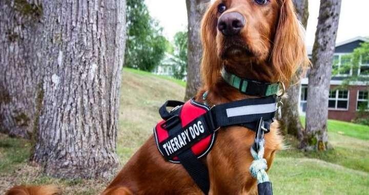 Terapia con mascotas, Pet Therapy