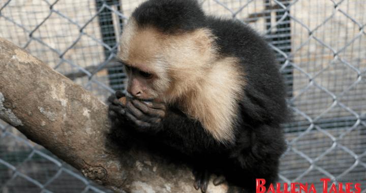 Alturas Wildlife Sanctuary Tour - Costa Ballena, Osa, Costa Rica