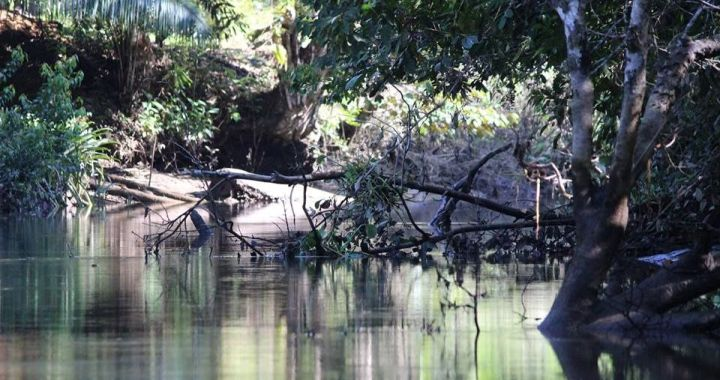 Wildlife Mangrove Tour on the Osa Peninsula Sierpe River