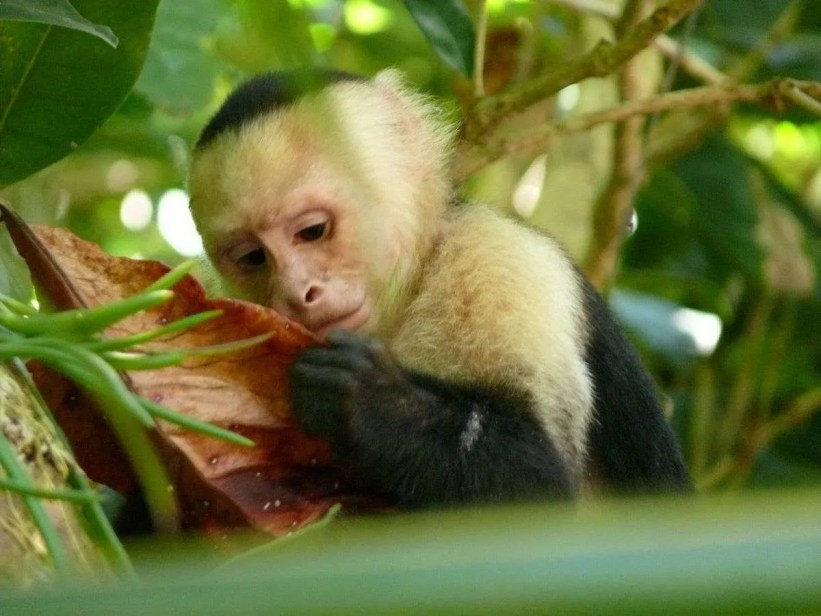 Environment & Wildlife, Sierpe in Osa, Costa Rica: Very Special for Sighting Wildlife!