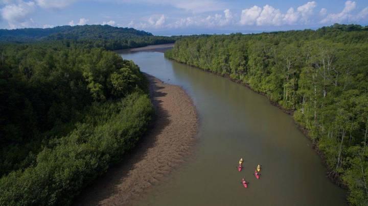 playa cativo mangrove climate change manglares cambio climatico park parque