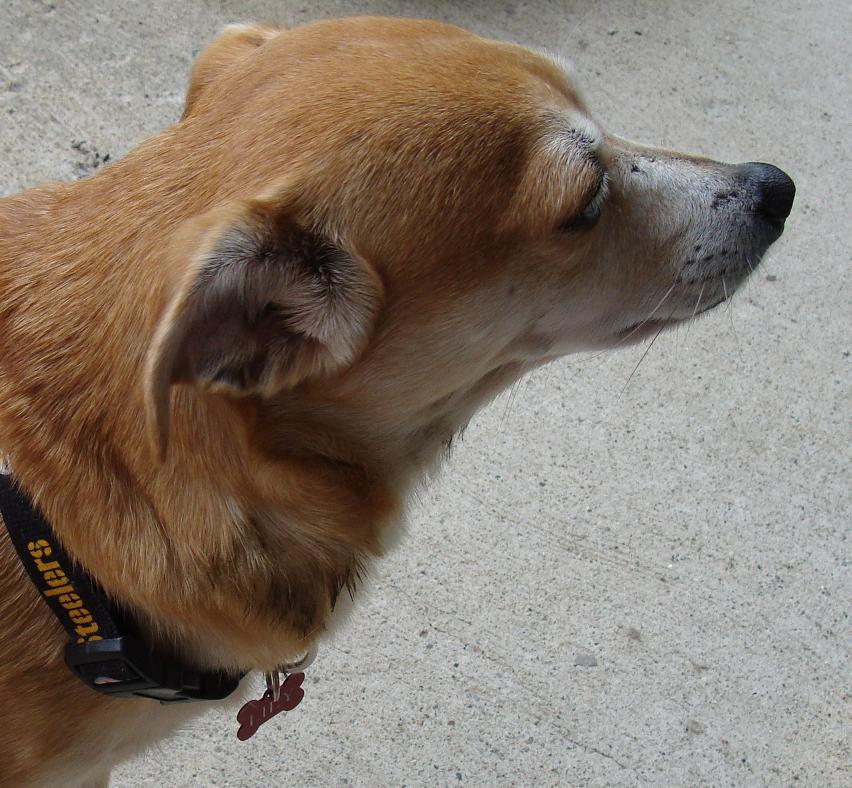 rightside Best Dog Leash For Pitbulls