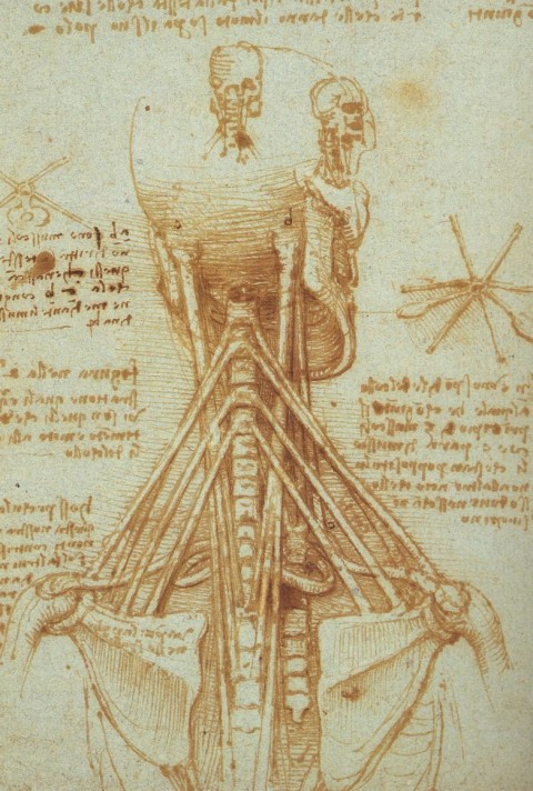 Leonardo_Anatomy_of_the_Neck,_c._1515
