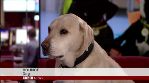 Dog lower third