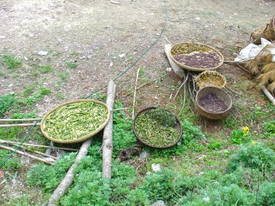 The small village on the hills II - Drying vegetables