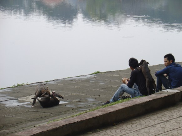 A man watching two dogs playing around at Ho Thien Quan