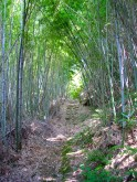 A nearby bamboo forest.
