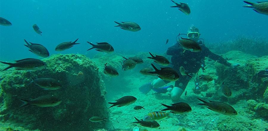 scuba diving in Kissamos - diving center in Kissamos