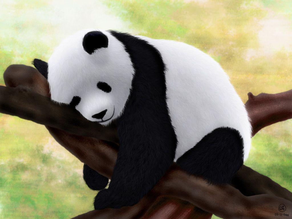 Cute Koala Hd Wallpaper Sleeping Panda Wallpaper 19509 Baltana