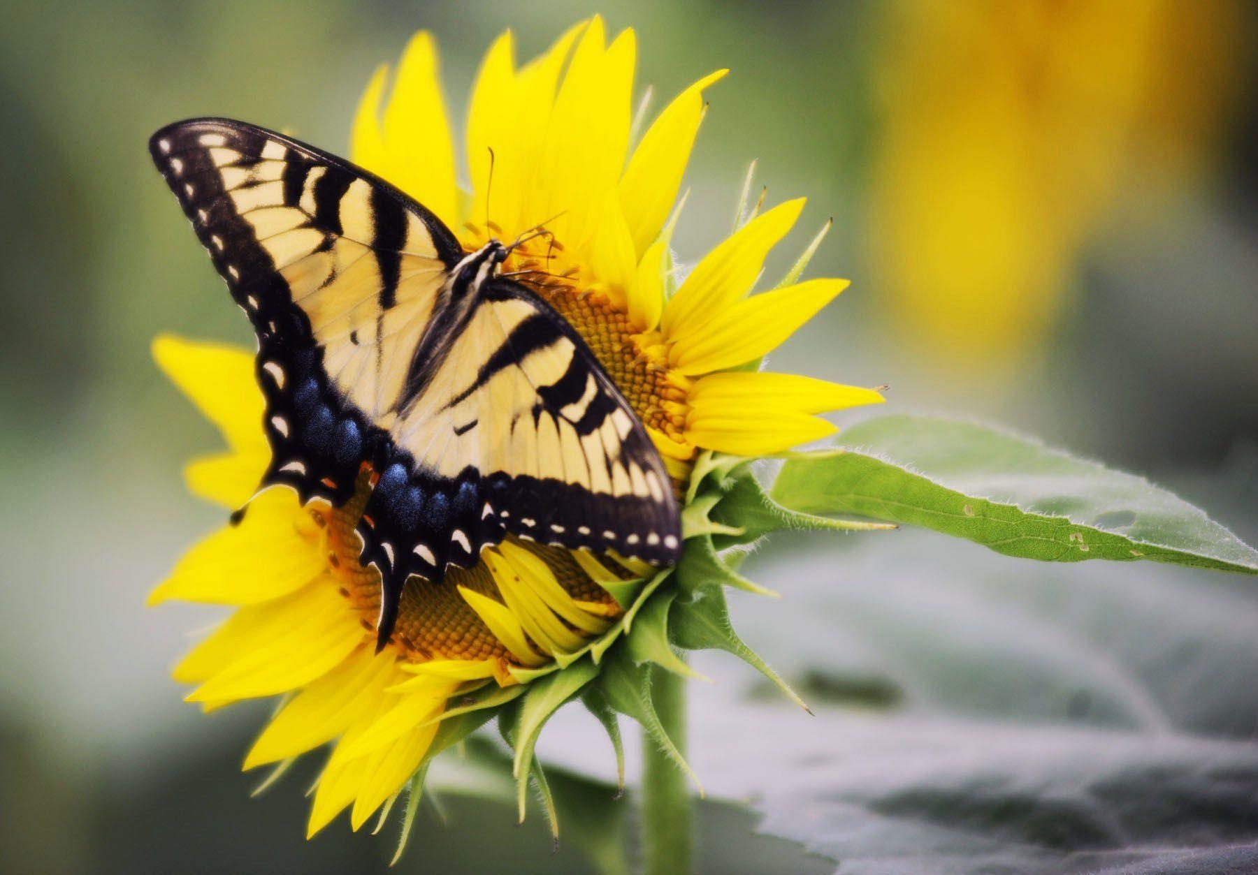 Flower Parts And Pollination Worksheet Answer Key Splash